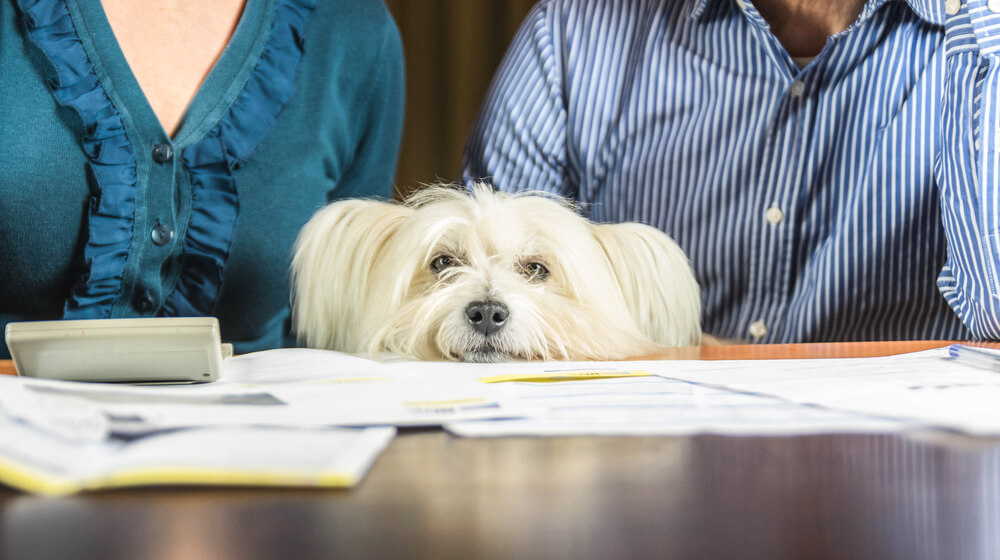 Posledice epidemije pri psih: več druženja z njimi, toda tudi več vedenjskih težav
