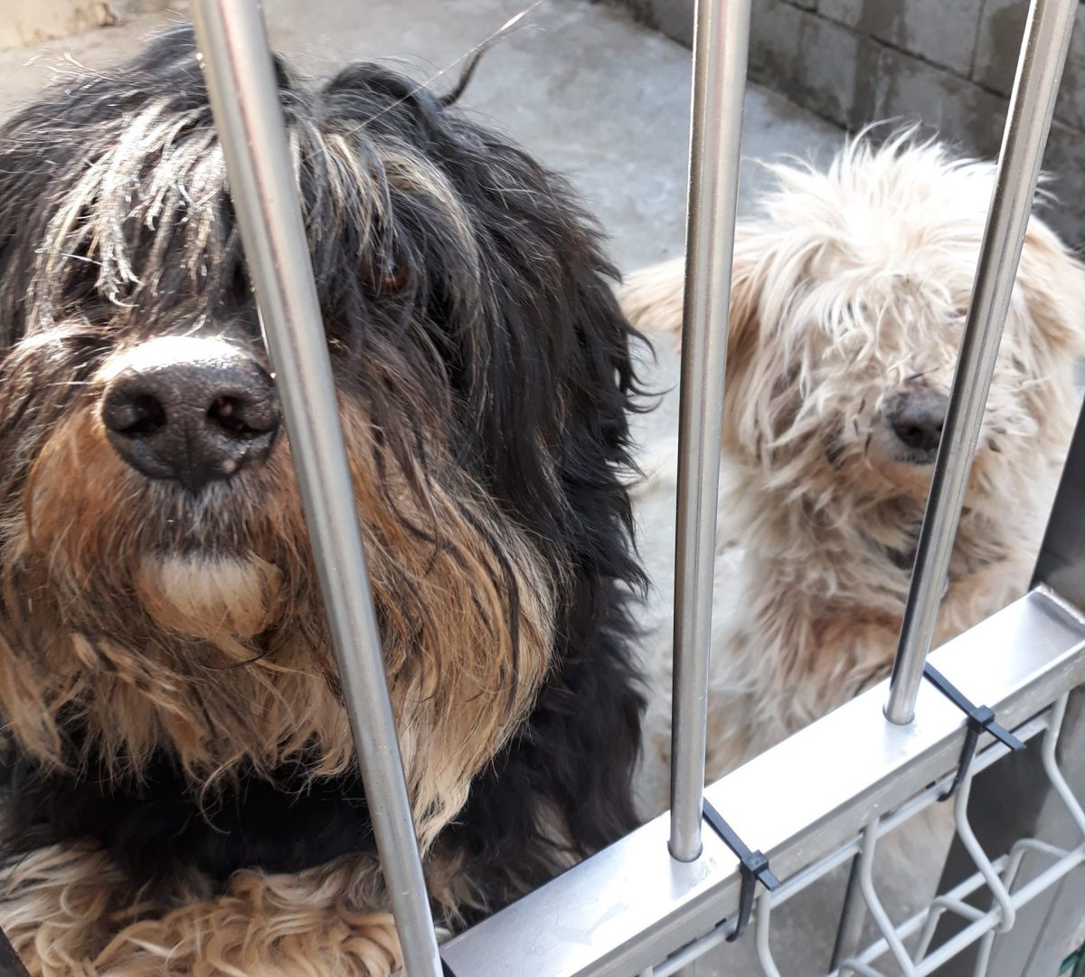 Tori in Pika – pozabljena od vseh, skupaj nista imela niti 15 kg