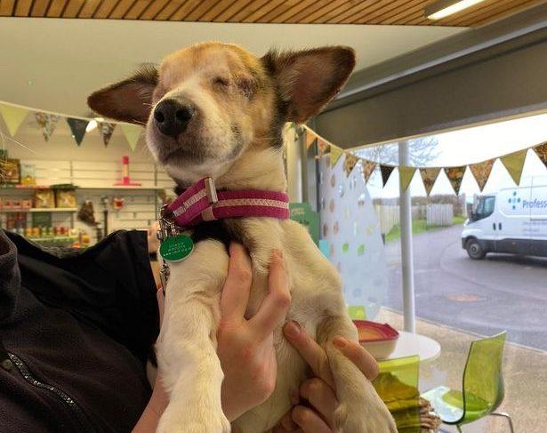Slepo psičko Penny našli zapuščeno in privezano na železniški postaji