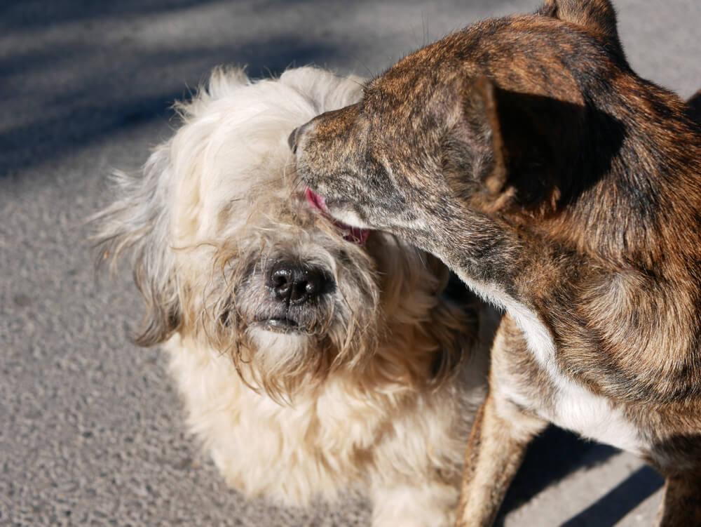 Ulični kuža celo noč ostal pri v nesreči poškodovanem pasjem prijatelju in čakal pomoč