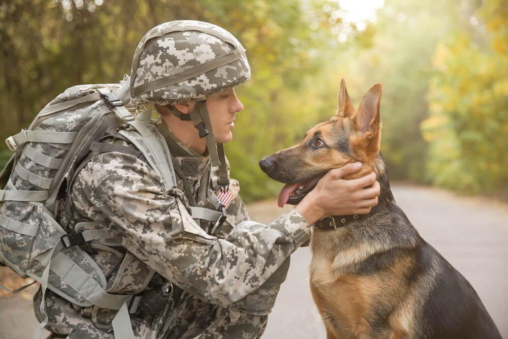 V zadnjih letih evtanaziranih na stotine vojaških psov, ki so odslužili svoje delo