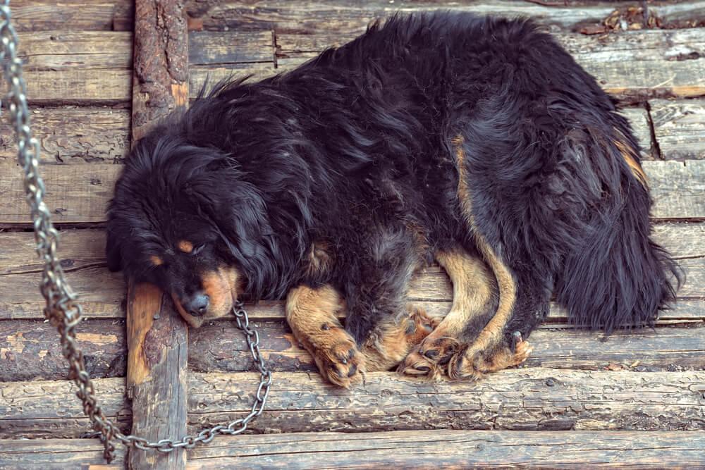 Predlog novega Zakona o zaščiti živali prepoveduje verige in evtanaziranje zdravih zapuščenih živali