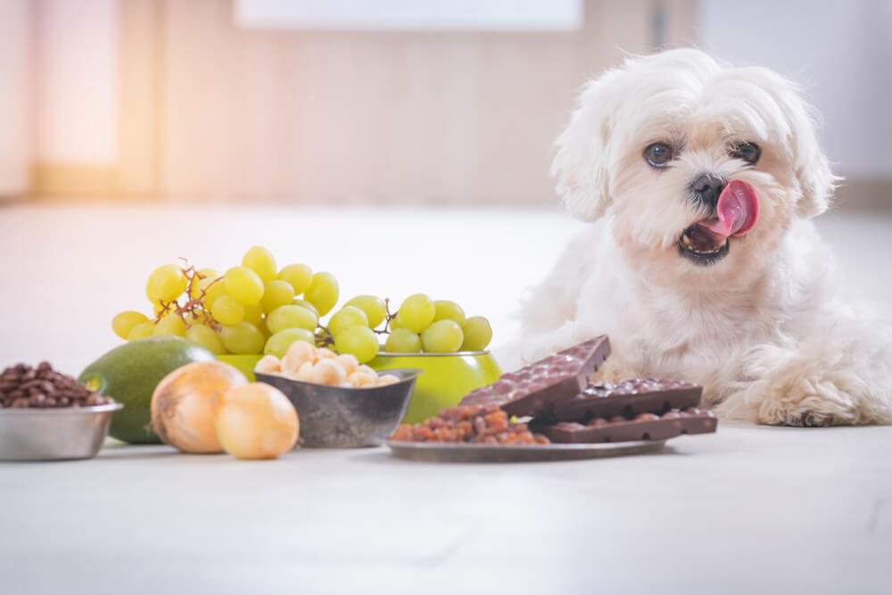 Seznam 28 živil, ki jih psi ne bi smeli jesti