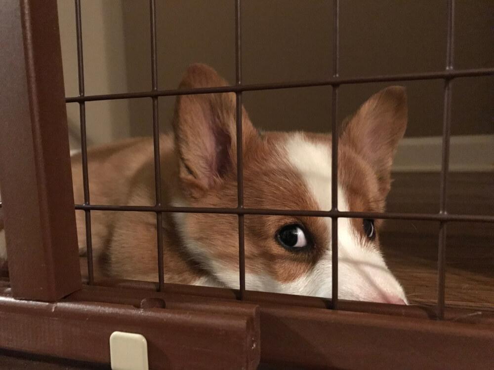 Averzivne - za psa boleče - metode vzgoje še vedno prisotne tudi med 'strokovnjaki'
