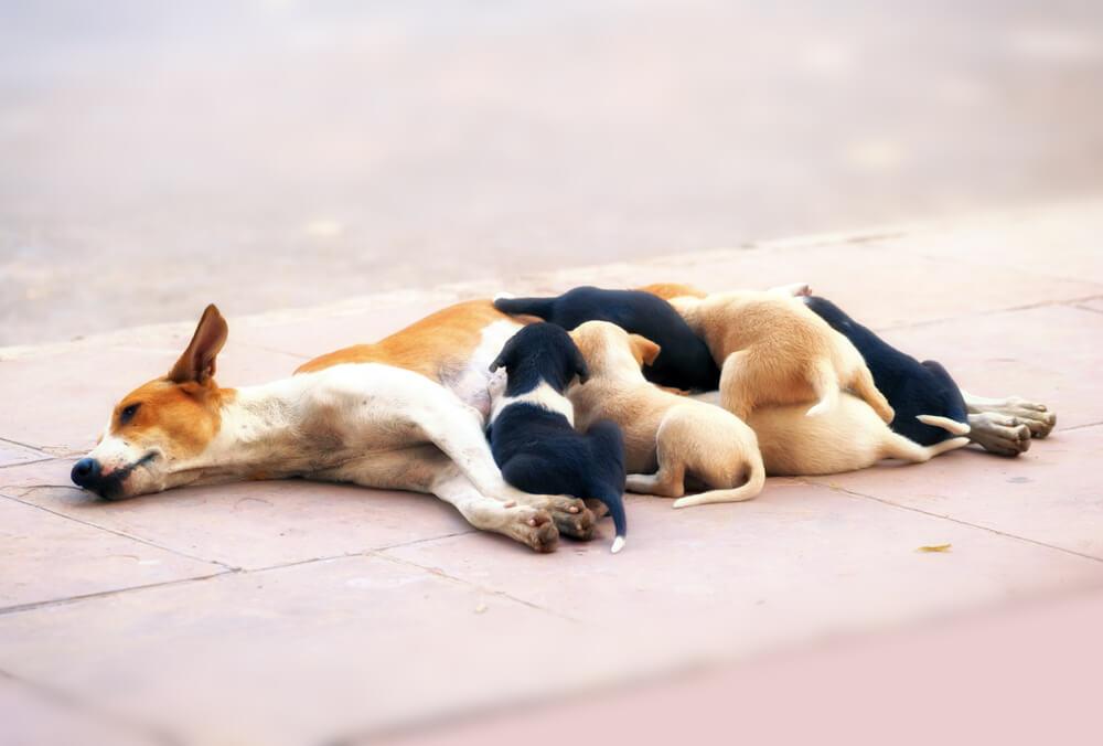 Kastracija psov v zavetišču – zavetišča bi morala biti vzgled, pa temu velikokrat ni tako