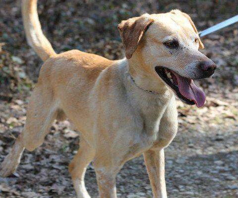 Lance, kuža, ki ga v mariborskem zavetišču skoraj 5 let ni nihče opazil
