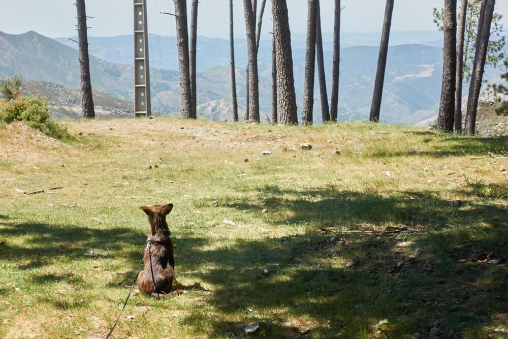Otrok psa - s sporočilom okrog vratu - pustil v parku, ker ni zmogel gledati, kako ga doma mučijo