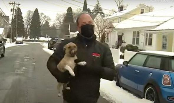 Video: Pasji mladiček 'zmoti' poročevalca pri javljanju v živo
