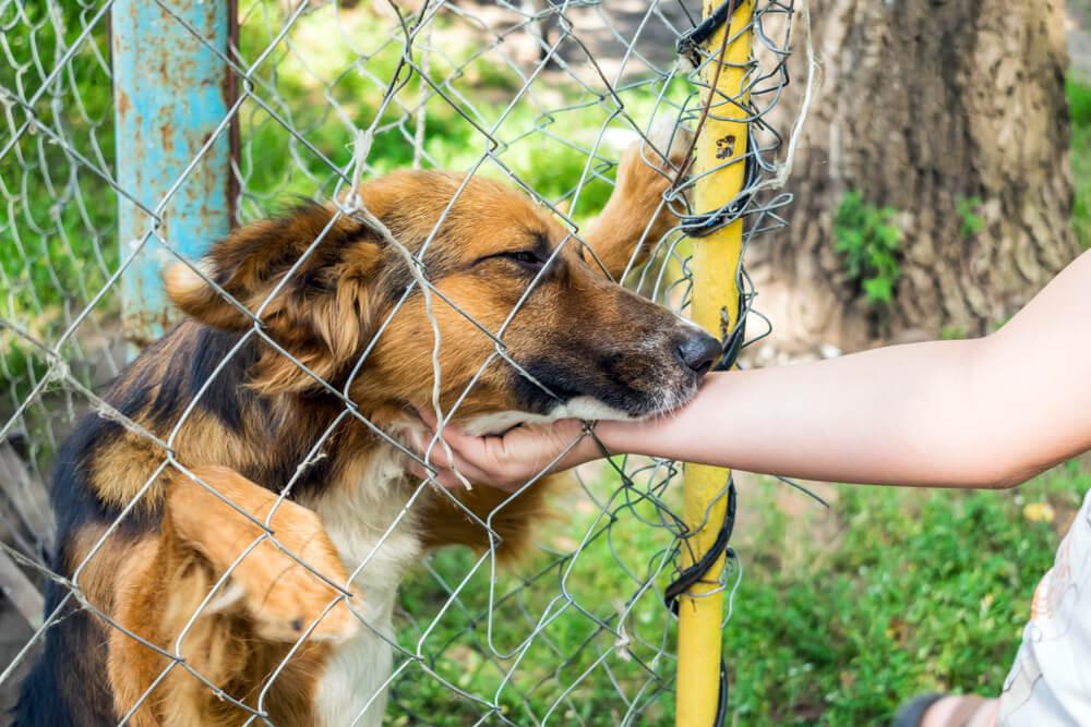 Po enem letu skrbi za zapuščeno psičko na verigi ji je inšpekcija le dovolila posvojitev