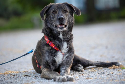 Zgodbe psov iz zavetišča: Rex je ostal sam po smrti svojega skrbnika