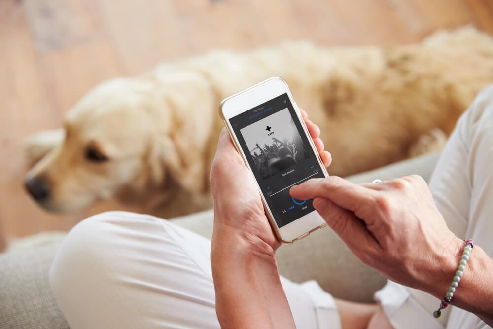 YouTube kanali s pomiritveno glasbo za pse