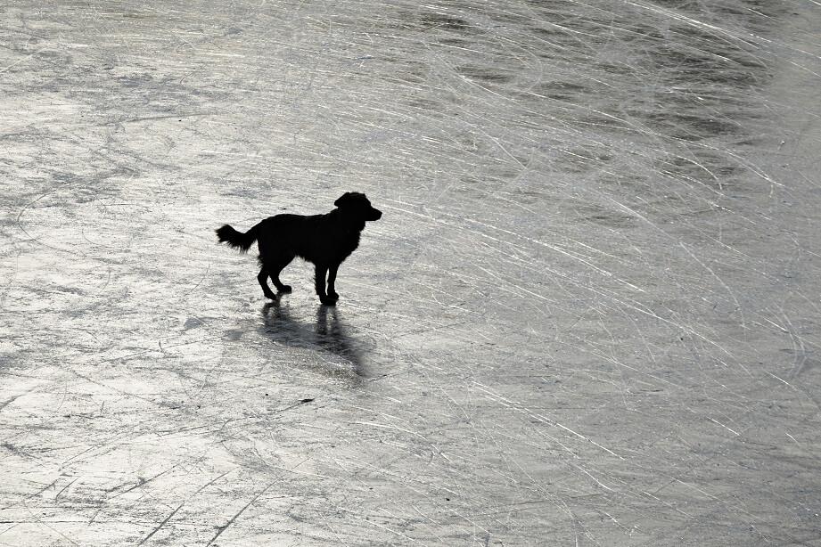 V pristanišču, kjer je videl odpluti svojega lastnika, zvest pes čakal nanj kar dva meseca