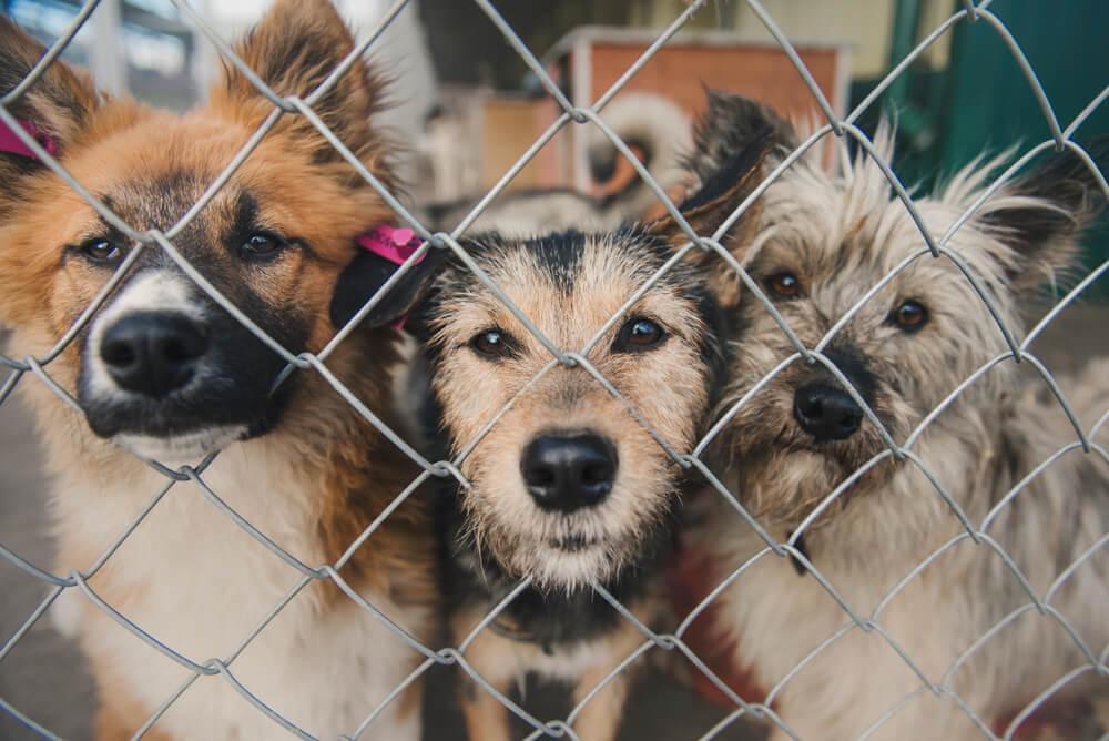 23 živalovarstvenih organizacij oblikovalo mnenja in predloge s področja zaščite in dobrobiti živali