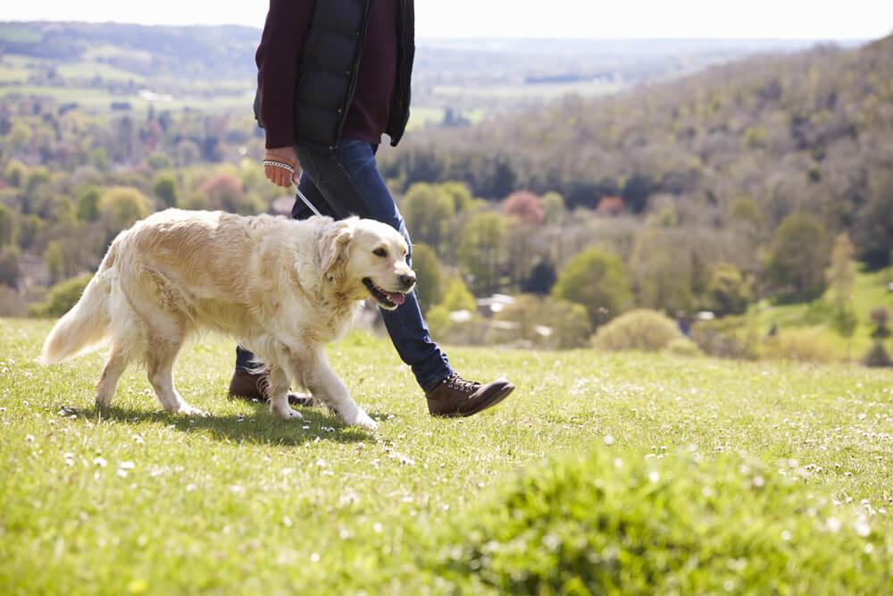 Manj obljudeni pasji sprehodi v okolici Ljubljane