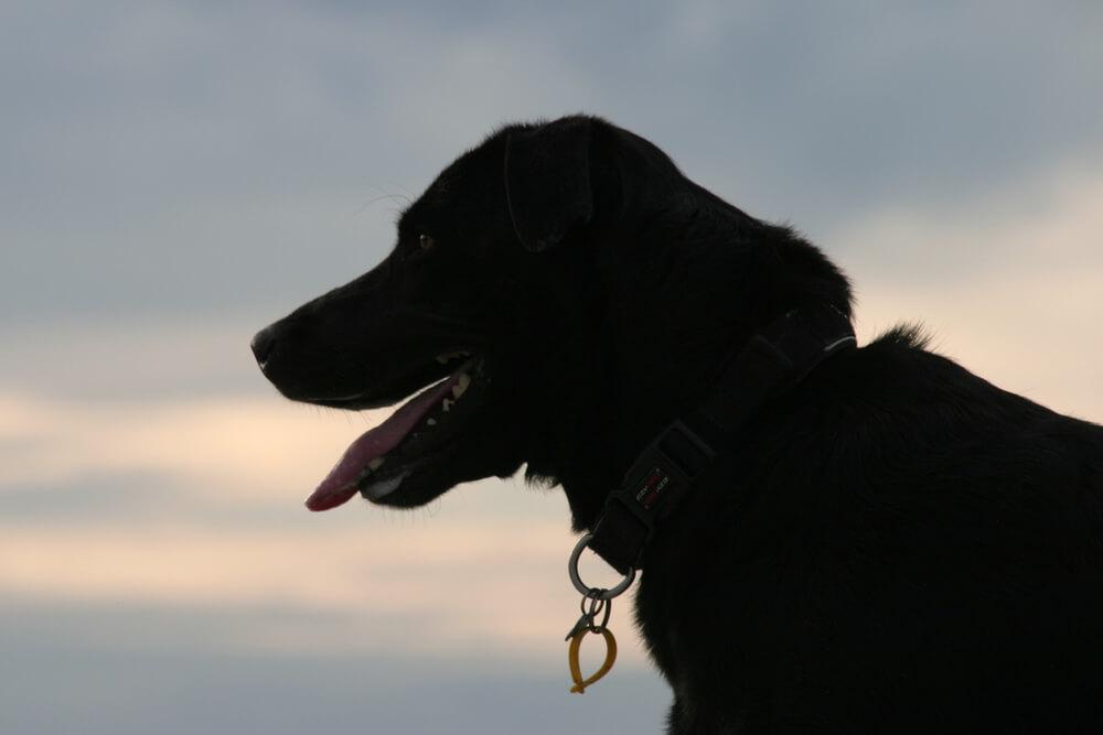 Po rezultatih obdukcije tragedije v Mengšu so psa Rona v petek uspavali