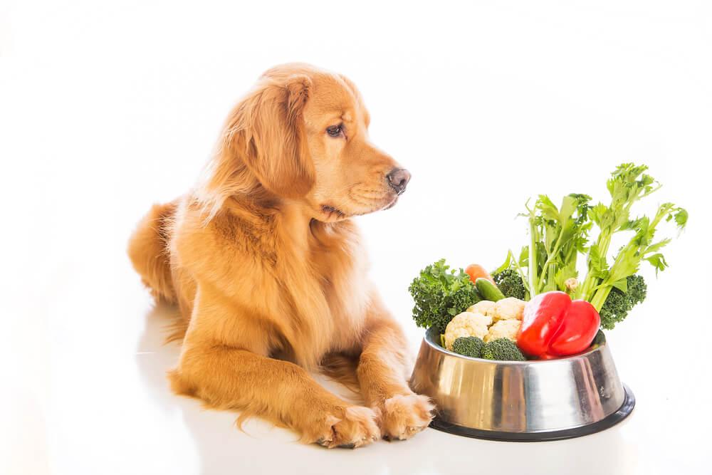 Precej veganov tudi svoje ljubljenčke hrani ta na način