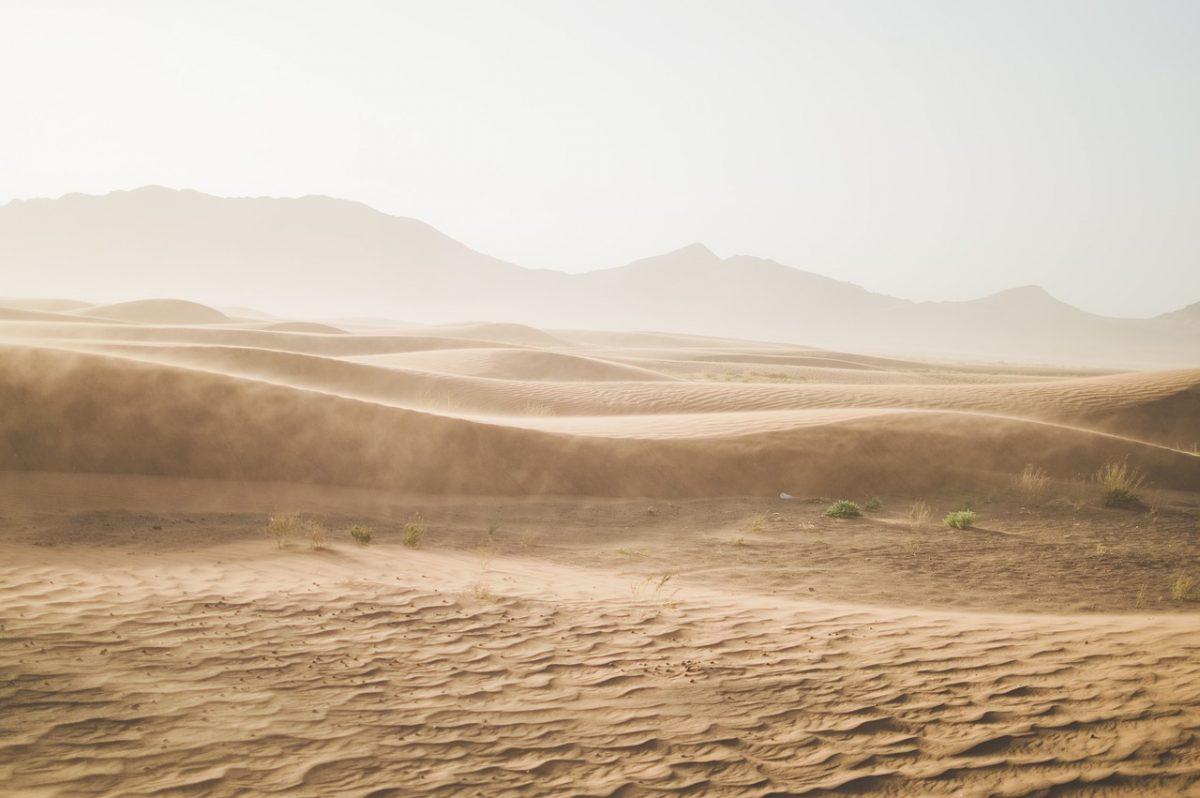 Psička ga je našla na 250 kilometrov dolgi tekaški preizkušnji čez puščavo